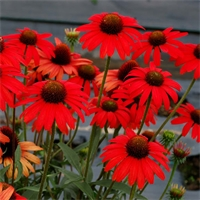 Martha's Top 10 Favorite Sun Loving Perennials