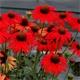 Martha's Top 10 Favorite Sun Loving Perennials