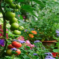 Best of Both Worlds: Creating an Edible Garden
