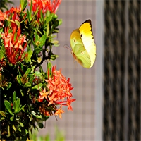 How To Attract Butterflies and Bees