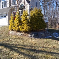 Updating Your Landscaping